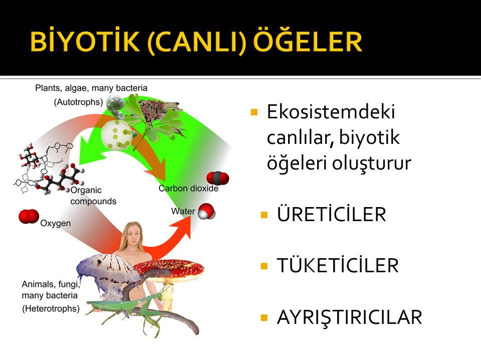  Ekosistemdeki canlılar, biyotik öğeleri oluşturur  ÜRETİCİLER  TÜKETİCİLER  AYRIŞTIRICILAR