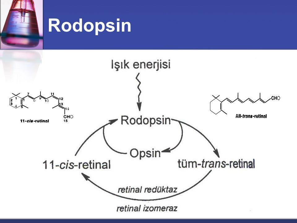 Rodopsin
