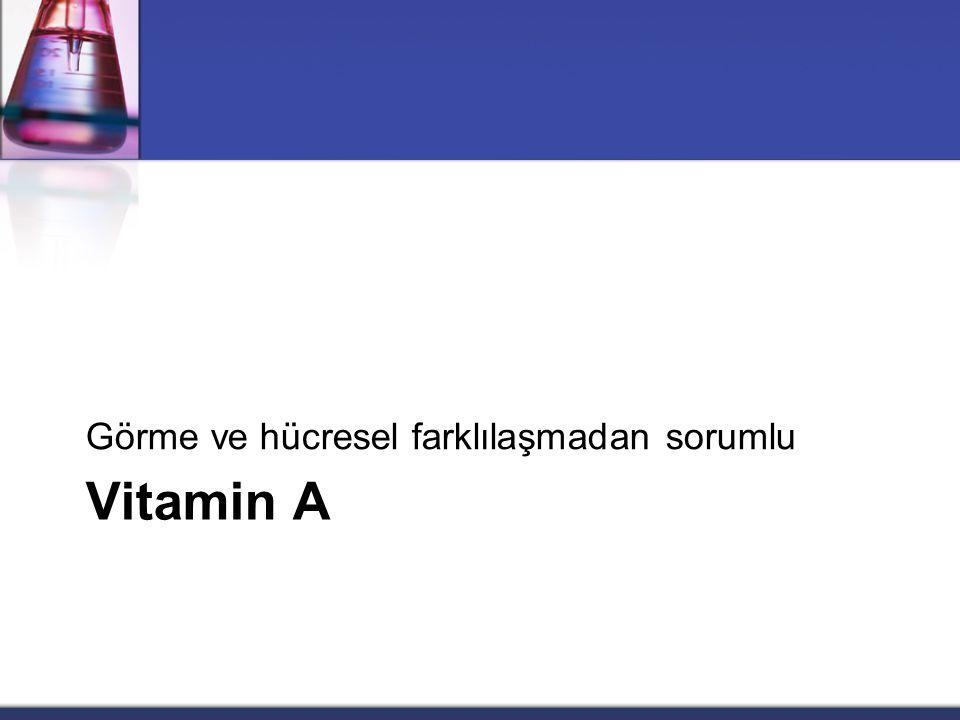 Vitamin A Görme ve hücresel farklılaşmadan sorumlu