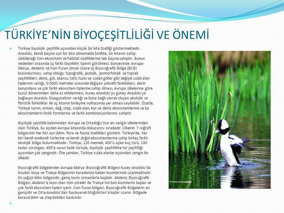 TÜRKİYE'NİN BİYOÇEŞİTLİLİĞİ VE ÖNEMİ  Türkiye biyolojik çeşitlilik açısından küçük bir kıta özelliği göstermektedir. Anadolu, kendi başına ayrı bir k