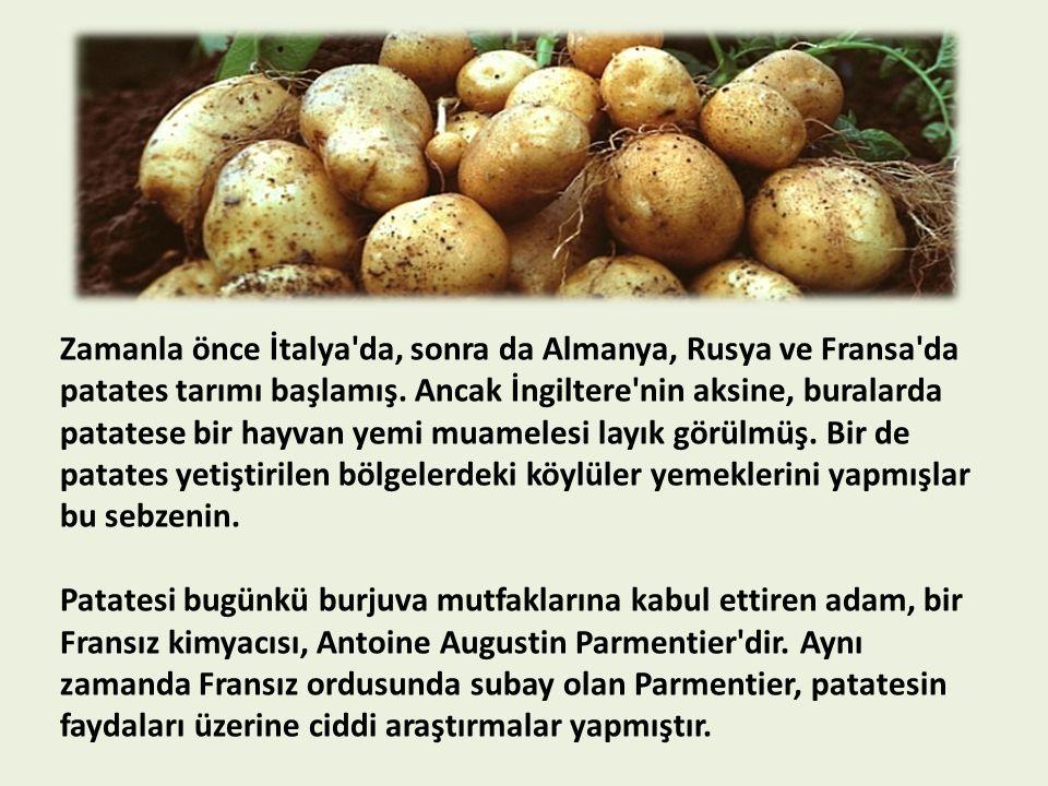 Zamanla önce İtalya'da, sonra da Almanya, Rusya ve Fransa'da patates tarımı başlamış. Ancak İngiltere'nin aksine, buralarda patatese bir hayvan yemi m
