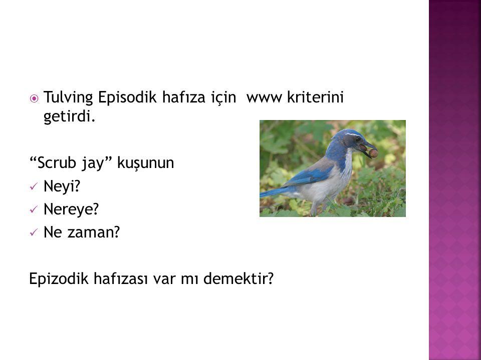 """ Tulving Episodik hafıza için www kriterini getirdi. """"Scrub jay"""" kuşunun  Neyi?  Nereye?  Ne zaman? Epizodik hafızası var mı demektir?"""