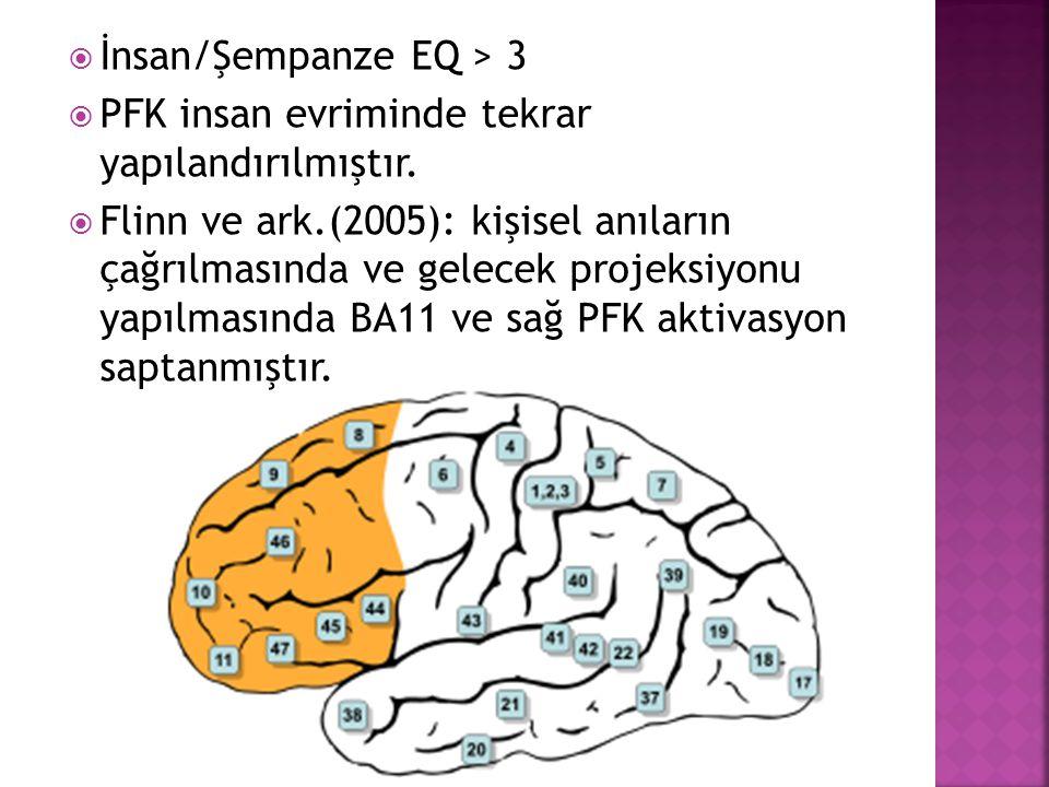  İnsan/Şempanze EQ > 3  PFK insan evriminde tekrar yapılandırılmıştır.  Flinn ve ark.(2005): kişisel anıların çağrılmasında ve gelecek projeksiyonu