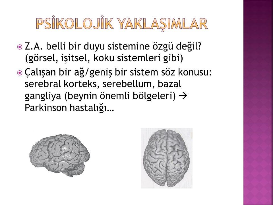  Z.A. belli bir duyu sistemine özgü değil? (görsel, işitsel, koku sistemleri gibi)  Çalışan bir ağ/geniş bir sistem söz konusu: serebral korteks, se