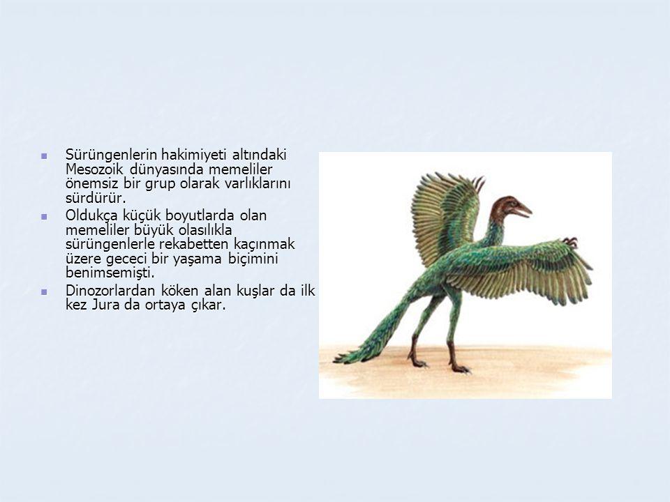  Sürüngenlerin hakimiyeti altındaki Mesozoik dünyasında memeliler önemsiz bir grup olarak varlıklarını sürdürür.  Oldukça küçük boyutlarda olan meme