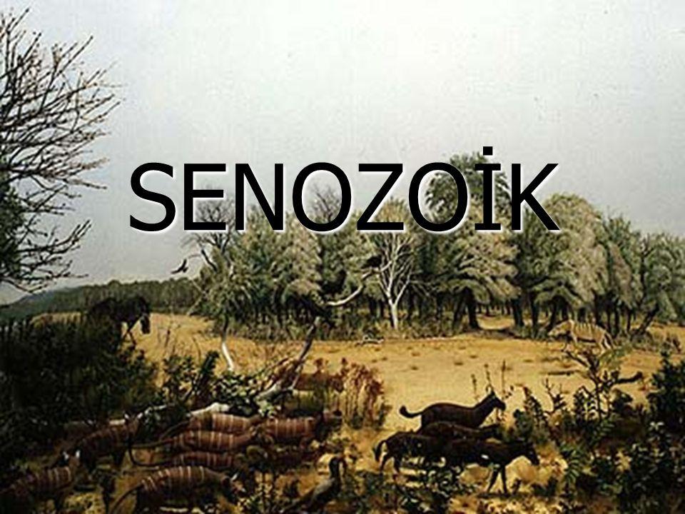 SENOZOİK