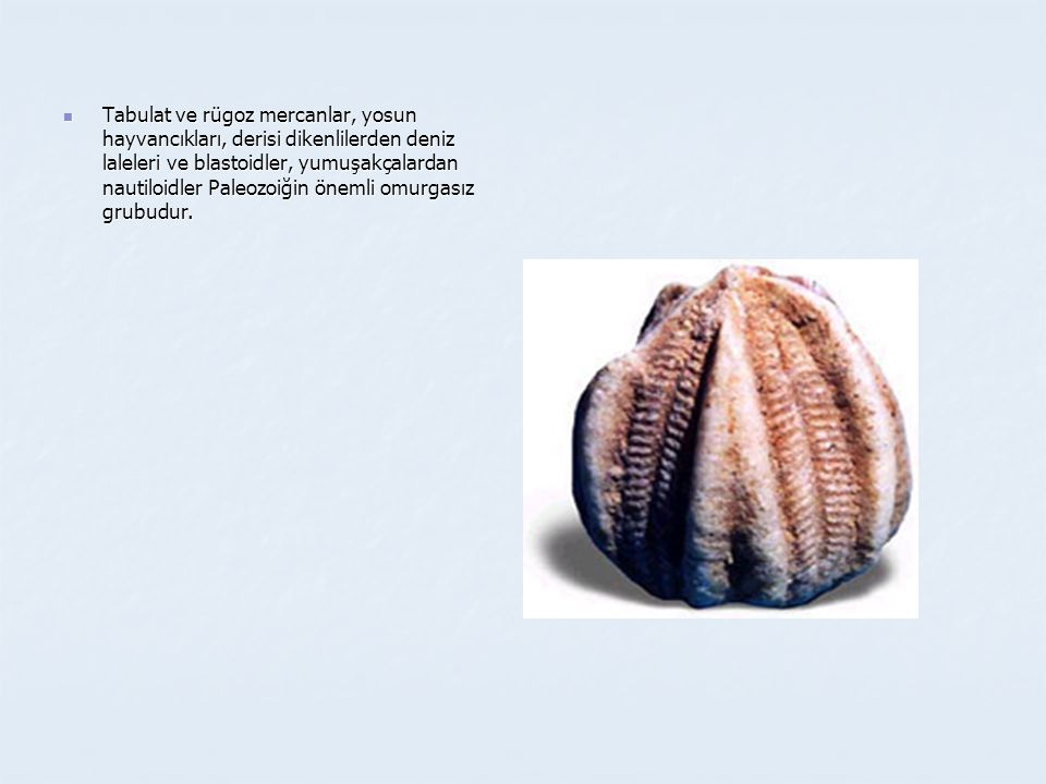  Tabulat ve rügoz mercanlar, yosun hayvancıkları, derisi dikenlilerden deniz laleleri ve blastoidler, yumuşakçalardan nautiloidler Paleozoiğin önemli