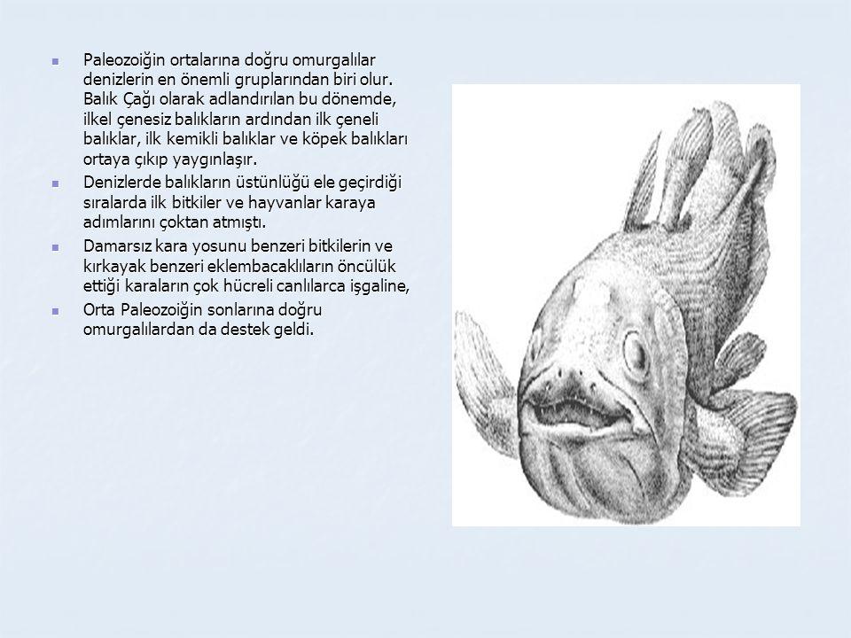  Paleozoiğin ortalarına doğru omurgalılar denizlerin en önemli gruplarından biri olur. Balık Çağı olarak adlandırılan bu dönemde, ilkel çenesiz balık