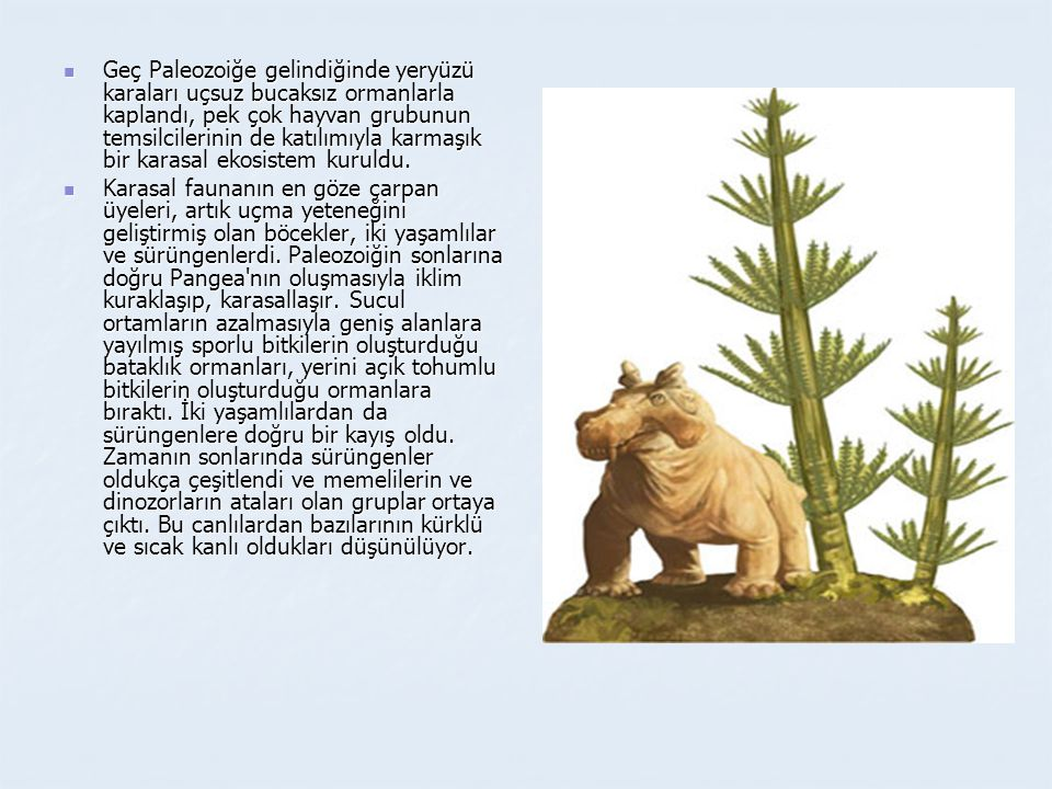  Geç Paleozoiğe gelindiğinde yeryüzü karaları uçsuz bucaksız ormanlarla kaplandı, pek çok hayvan grubunun temsilcilerinin de katılımıyla karmaşık bir