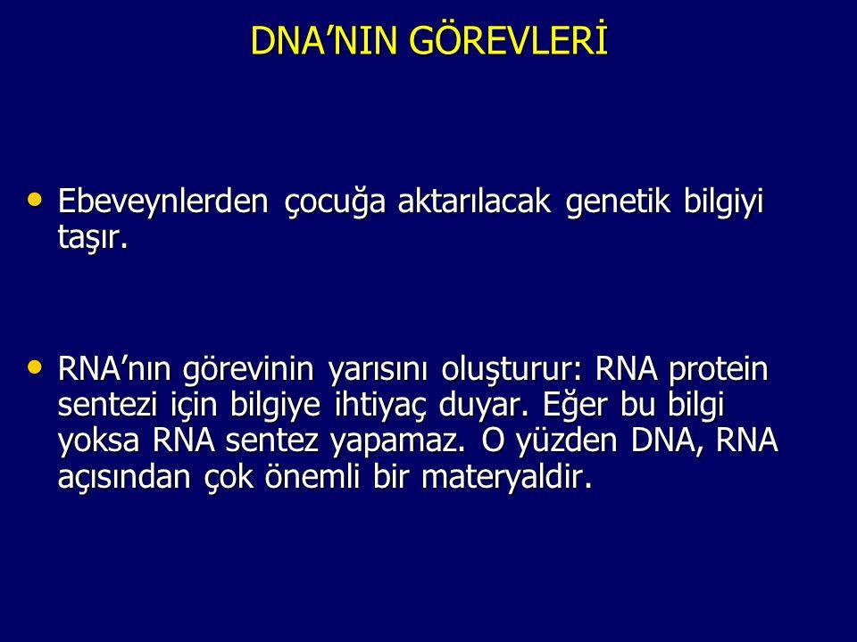 DNA'NIN GÖREVLERİ • Ebeveynlerden çocuğa aktarılacak genetik bilgiyi taşır. • RNA'nın görevinin yarısını oluşturur: RNA protein sentezi için bilgiye i