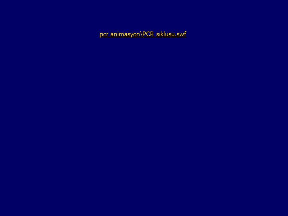 pcr animasyon\PCR sıklusu.swf pcr animasyon\PCR sıklusu.swf