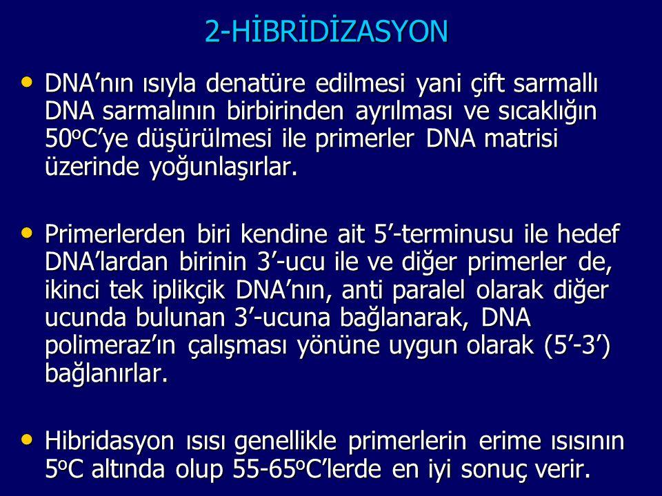 2-HİBRİDİZASYON • DNA'nın ısıyla denatüre edilmesi yani çift sarmallı DNA sarmalının birbirinden ayrılması ve sıcaklığın 50 o C'ye düşürülmesi ile pri