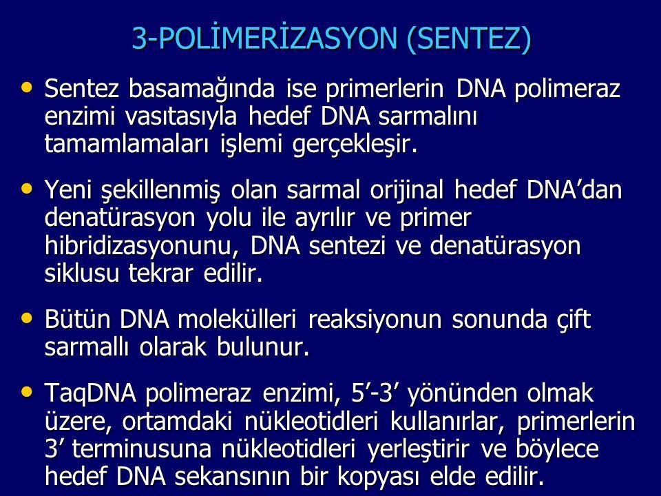 3-POLİMERİZASYON (SENTEZ) • Sentez basamağında ise primerlerin DNA polimeraz enzimi vasıtasıyla hedef DNA sarmalını tamamlamaları işlemi gerçekleşir.
