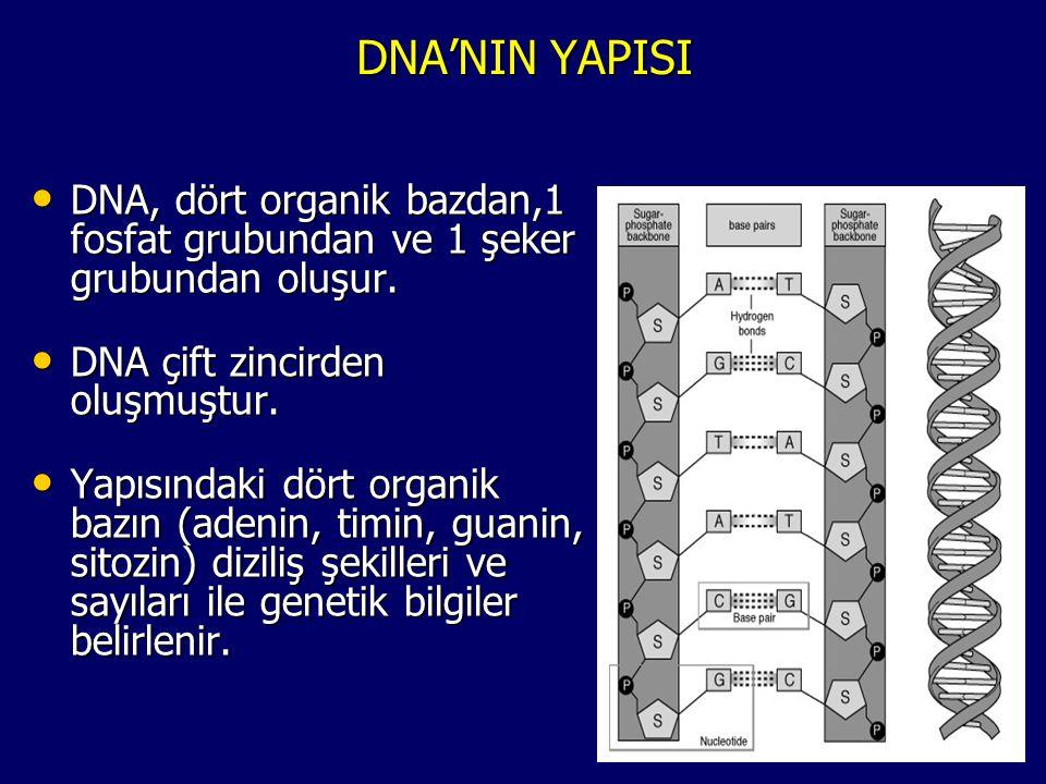 DNA'NIN YAPISI • DNA, dört organik bazdan,1 fosfat grubundan ve 1 şeker grubundan oluşur. • DNA çift zincirden oluşmuştur. • Yapısındaki dört organik