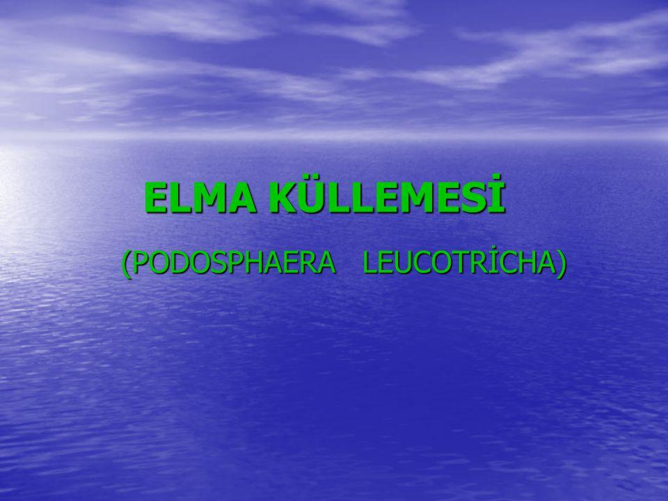 ELMA KÜLLEMESİ (PODOSPHAERA LEUCOTRİCHA) (PODOSPHAERA LEUCOTRİCHA)