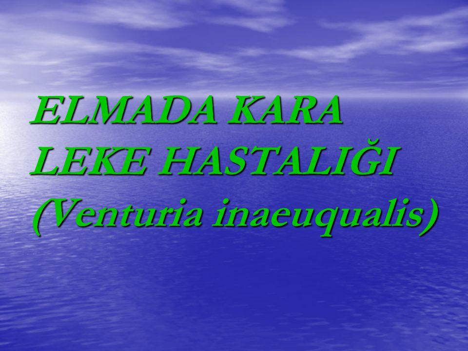 ELMADA KARA LEKE HASTALIĞI (Venturia inaeuqualis)
