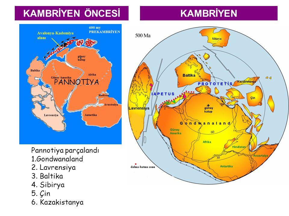 KAMBRİYEN ÖNCESİ PANNOTİYA Pannotiya parçalandı 1.Gondwanaland 2. Lavrensiya 3. Baltika 4. Sibirya 5. Çin 6. Kazakistanya KAMBRİYEN