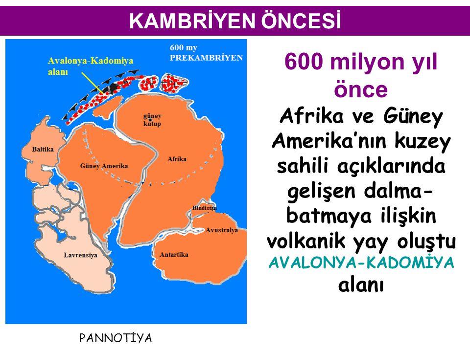 KAMBRİYEN ÖNCESİ 600 milyon yıl önce Afrika ve Güney Amerika'nın kuzey sahili açıklarında gelişen dalma- batmaya ilişkin volkanik yay oluştu AVALONYA-KADOMİYA alanı PANNOTİYA