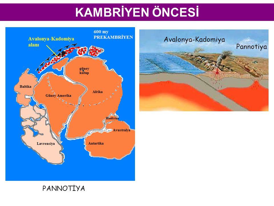 KAMBRİYEN ÖNCESİ PANNOTİYA Avalonya-Kadomiya Pannotiya