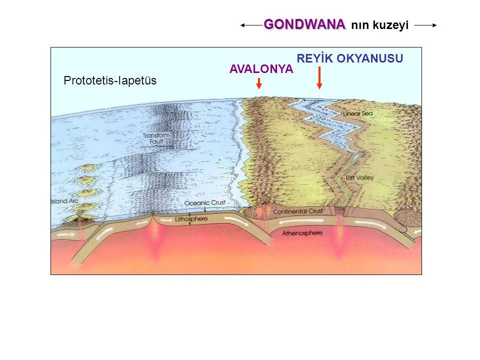 GONDWANA GONDWANA nın kuzeyi AVALONYA REYİK OKYANUSU Prototetis-Iapetüs