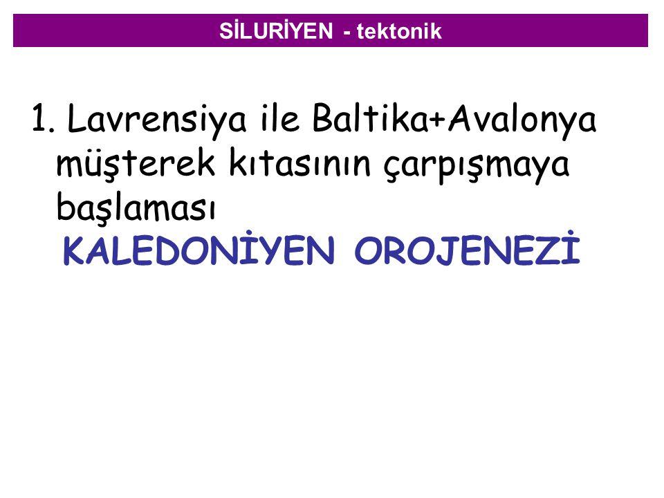SİLURİYEN - tektonik 1. Lavrensiya ile Baltika+Avalonya müşterek kıtasının çarpışmaya başlaması KALEDONİYEN OROJENEZİ