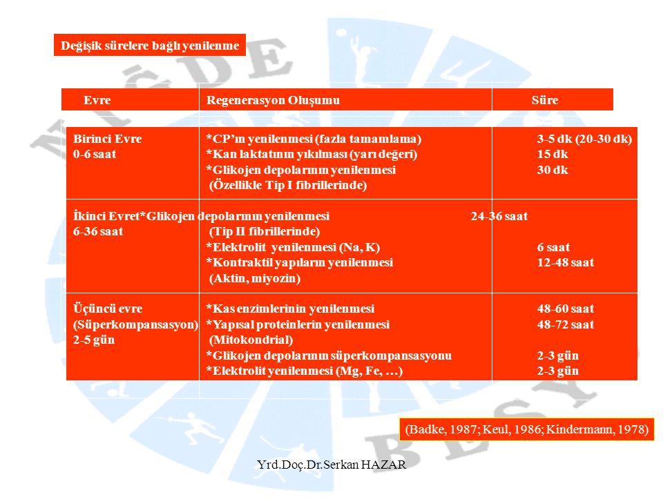 Yrd.Doç.Dr.Serkan HAZAR Değişik sürelere bağlı yenilenme Evre Regenerasyon OluşumuSüre Birinci Evre*CP'ın yenilenmesi (fazla tamamlama)3-5 dk (20-30 d