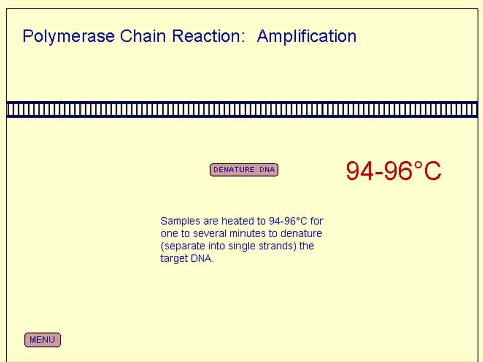 PCR da kullanılan malzemeler 1)Kalıp DNA 2)Reaction buffer (x 2,5 µl) 3)forward primer (x 0,5 µl) 4)reverse primer (x 0,5 µl) 5)dNTP (x 4 µl) 6)MgCl 2 (x 2,5 µl) 7)Taq Polimraz (x 0,25 µl)
