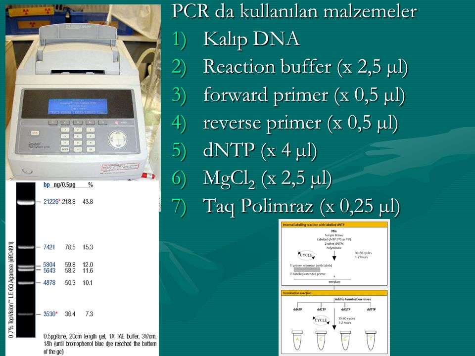 PCR da kullanılan malzemeler 1)Kalıp DNA 2)Reaction buffer (x 2,5 µl) 3)forward primer (x 0,5 µl) 4)reverse primer (x 0,5 µl) 5)dNTP (x 4 µl) 6)MgCl 2