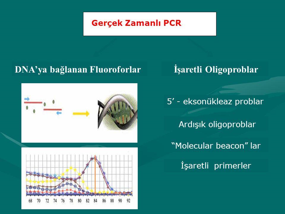 """Gerçek Zamanlı PCR DNA'ya bağlanan Fluoroforlar İşaretli Oligoproblar 5' - eksonükleaz problar Ardışık oligoproblar """"Molecular beacon"""" lar İşaretli pr"""