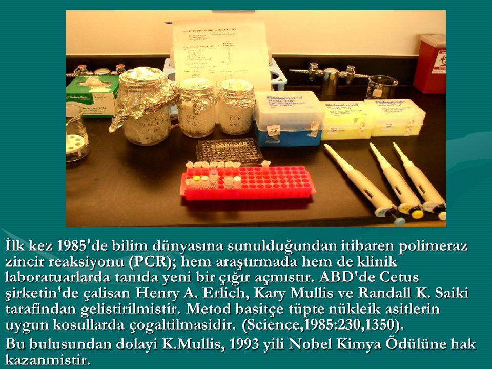 PCR Reaksiyonu.