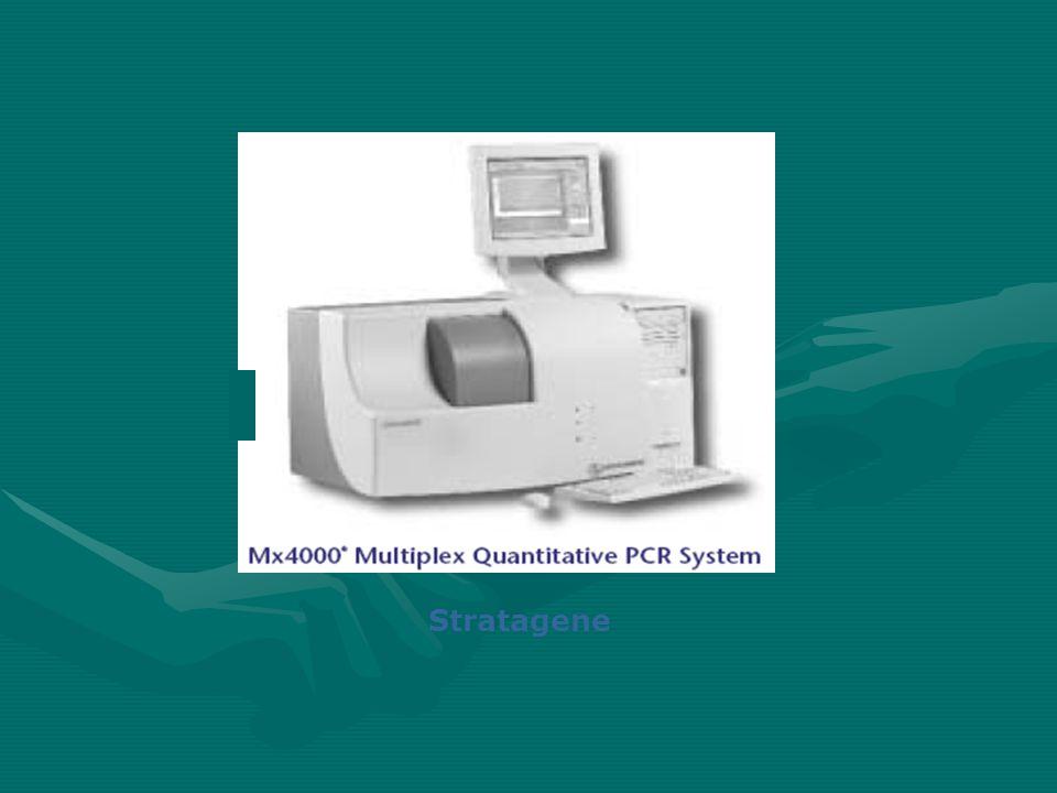  Exponential Faz  Linear Faz (yüksek farklılık)  Plateu Faz (End-point) PCR'ın TEMEL FAZLARI