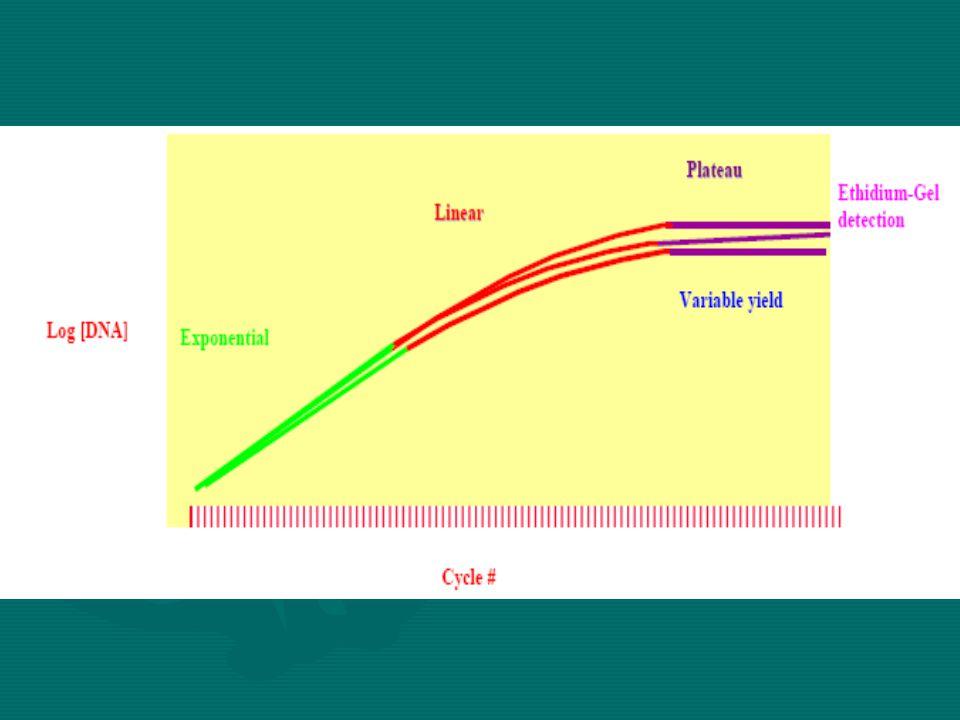 Exponential Faz  PCR ürün miktarı her siklusta tam olarak iki kat artar  Reaksiyon spesifik ve tamdır  Reaksiyonun Etkinliği %100 dür  Reaksiyonun tüm bileşenleri tazedir.