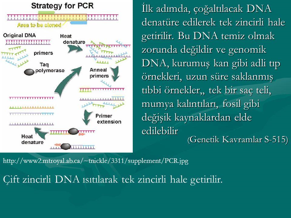İlk adımda, çoğaltılacak DNA denatüre edilerek tek zincirli hale getirilir. Bu DNA temiz olmak zorunda değildir ve genomik DNA, kurumuş kan gibi adli