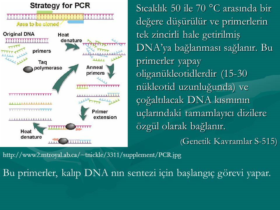 DNA polimerazın ısıya dayanıklı bir şekli reaksiyon karışımına ilave edilir ve DNA sentezi 70 ile 75 °C arasındaki sıcaklıkta gerçekleşir.