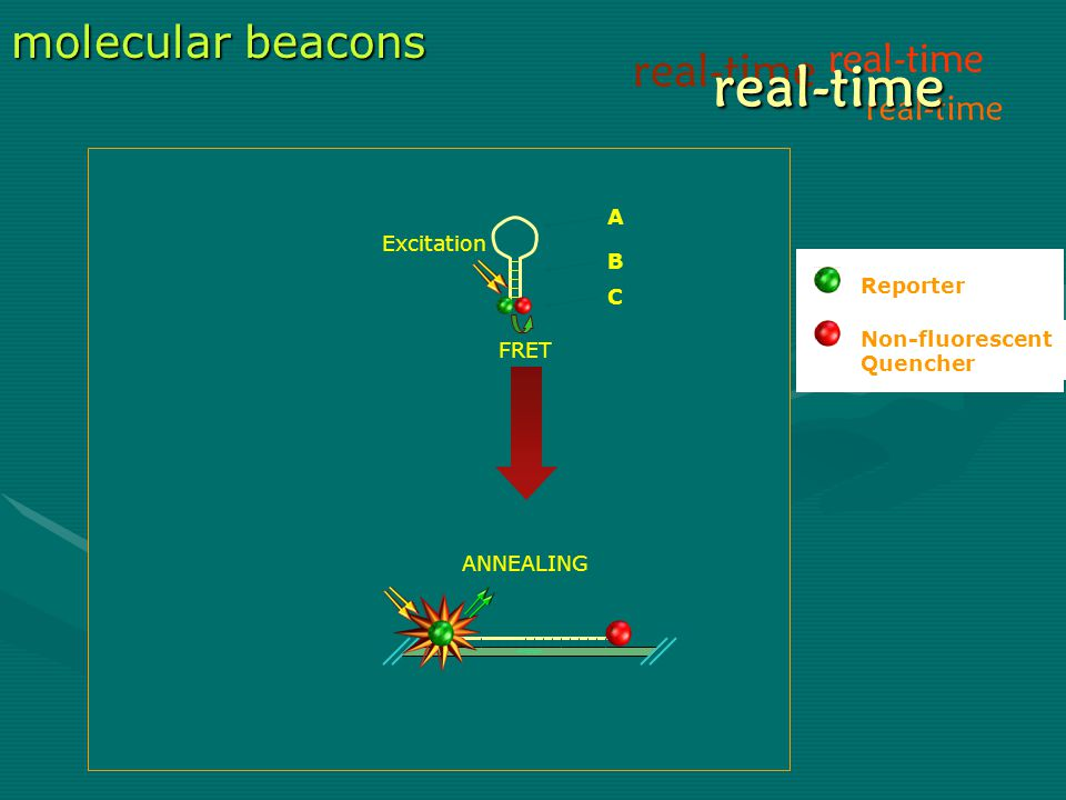 Amplicon molecular beacons A B C FRET real-time real-time Reporter Non-fluorescent Quencher Excitation ANNEALING