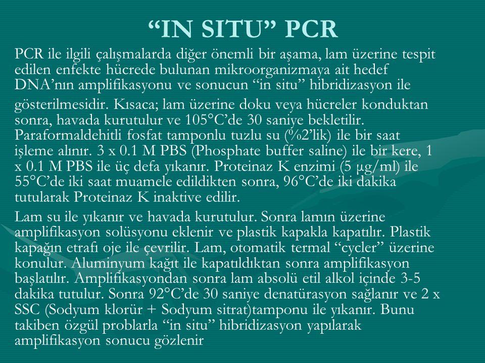 """""""IN SITU"""" PCR PCR ile ilgili çalışmalarda diğer önemli bir aşama, lam üzerine tespit edilen enfekte hücrede bulunan mikroorganizmaya ait hedef DNA'nın"""