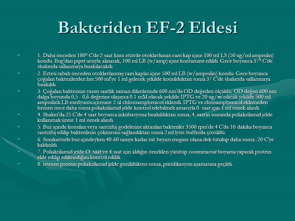 Bakteriden EF-2 Eldesi •1. Daha önceden 180° C'de 2 saat kuru etüvde otoklavlanan cam kap içine 100 ml LS (50 ug/ml ampisilin) kondu. Bug'dan pipet uc