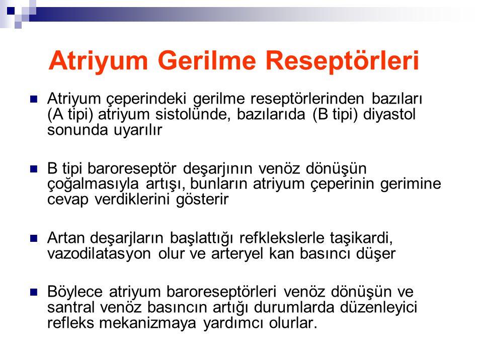 Atriyum Gerilme Reseptörleri  Atriyum çeperindeki gerilme reseptörlerinden bazıları (A tipi) atriyum sistolünde, bazılarıda (B tipi) diyastol sonunda