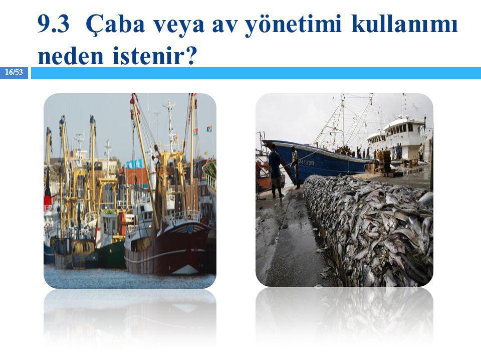 16/53 9.3Çaba veya av yönetimi kullanımı neden istenir?