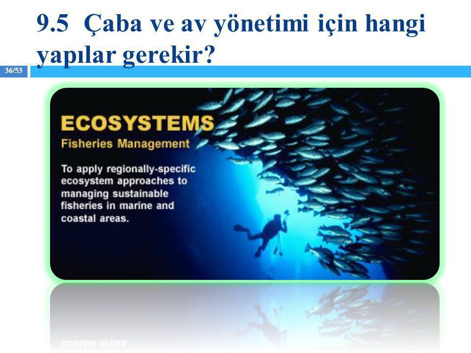 36/53 9.5Çaba ve av yönetimi için hangi yapılar gerekir?