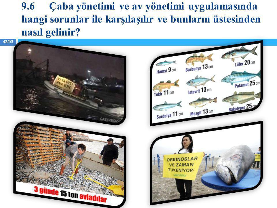 43/53 9.6Çaba yönetimi ve av yönetimi uygulamasında hangi sorunlar ile karşılaşılır ve bunların üstesinden nasıl gelinir?
