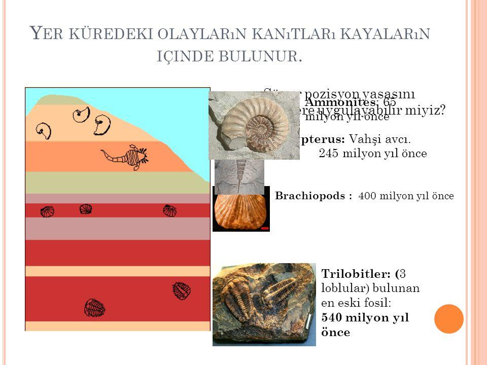 Y ER KÜREDEKI OLAYLARıN KANıTLARı KAYALARıN IÇINDE BULUNUR. Süper pozisyon yasasını fosillere uygulayabilir miyiz? Trilobitler: ( 3 loblular) bulunan