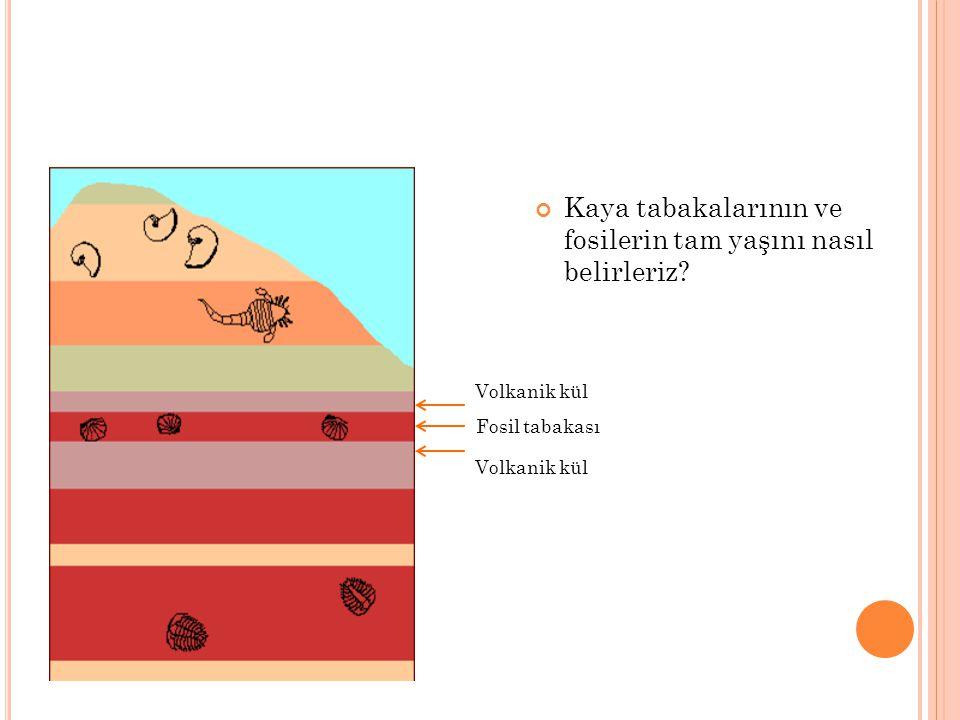 Kaya tabakalarının ve fosilerin tam yaşını nasıl belirleriz? Volkanik kül Fosil tabakası