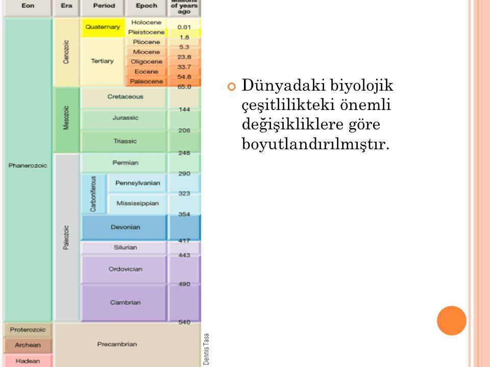 Dünyadaki biyolojik çeşitlilikteki önemli değişikliklere göre boyutlandırılmıştır.