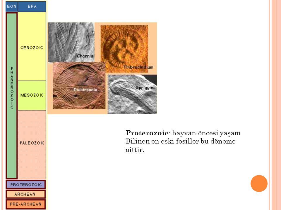 Proterozoic : hayvan öncesi yaşam Bilinen en eski fosiller bu döneme aittir.