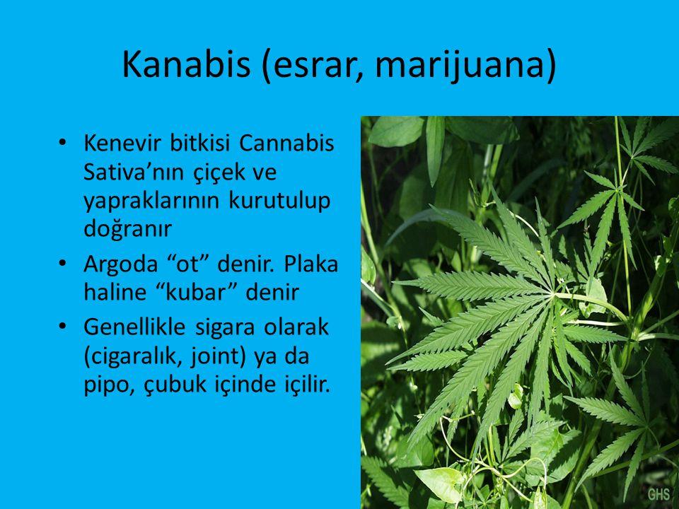Kanabis (esrar, marijuana) • Kenevir bitkisi Cannabis Sativa'nın çiçek ve yapraklarının kurutulup doğranır • Argoda ot denir.