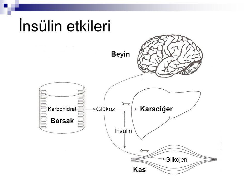 İnsülin etkileri Beyin Glükoz İnsülin Karaciğer Glikojen Karbohidrat Barsak Kas