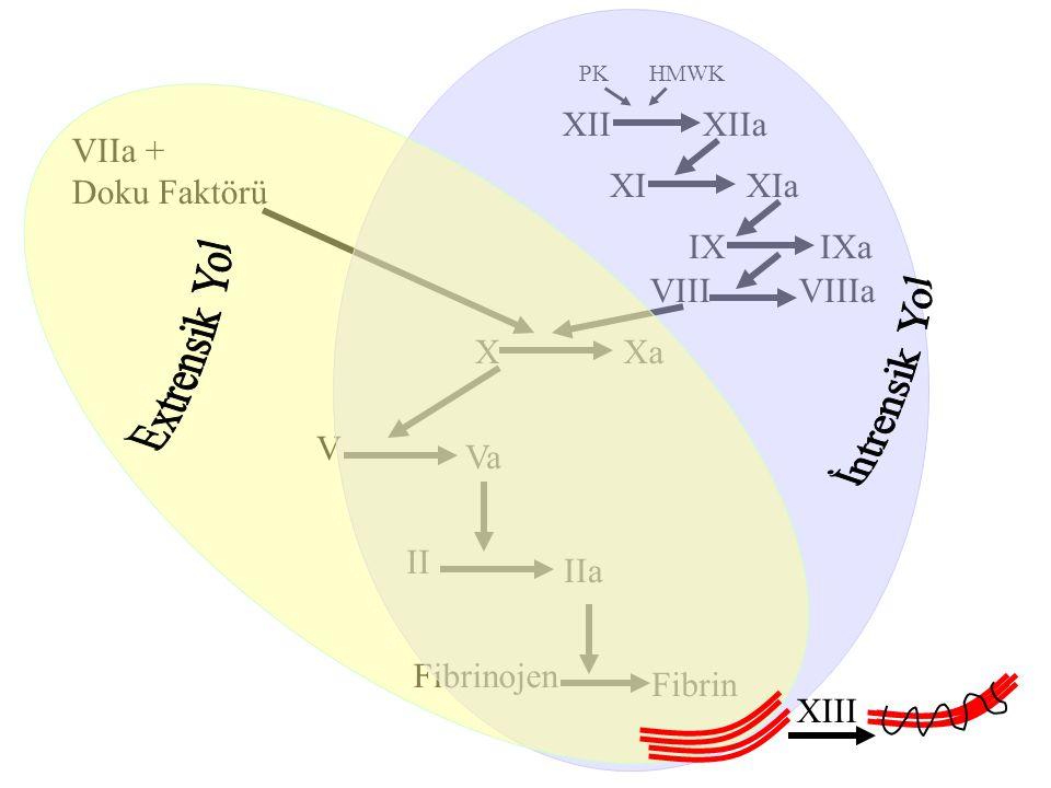 VIIIaVIII VIIa + Doku Faktörü XXa V Va II IIa Fibrinojen Fibrin PKHMWK XIIXIIa XIXIa IXIXa XIII