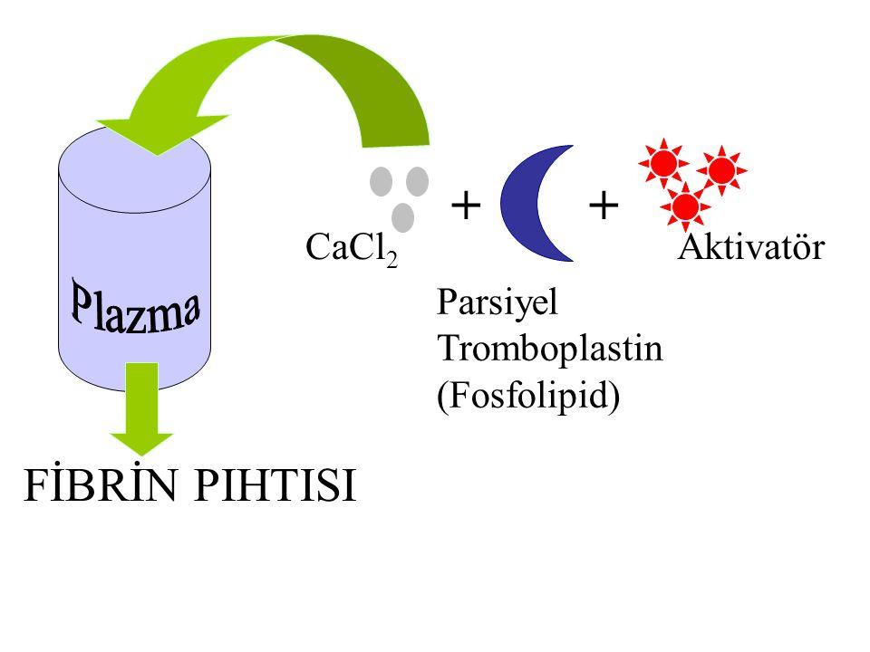 ++ CaCl 2 Parsiyel Tromboplastin (Fosfolipid) Aktivatör FİBRİN PIHTISI