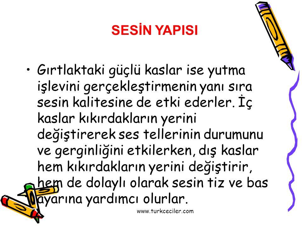 www.turkceciler.com •Gırtlaktaki güçlü kaslar ise yutma işlevini gerçekleştirmenin yanı sıra sesin kalitesine de etki ederler. İç kaslar kıkırdakların